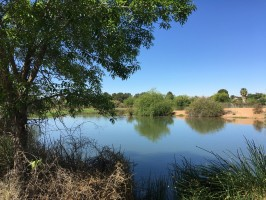 gilbert-riparian-preserve-lake